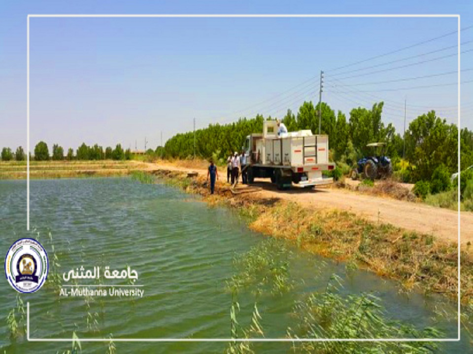 جامعة المثنى تطلق اكثر من اربعة الاف سمكة في بحيراتها لتعظم الموارد وتعزيزها